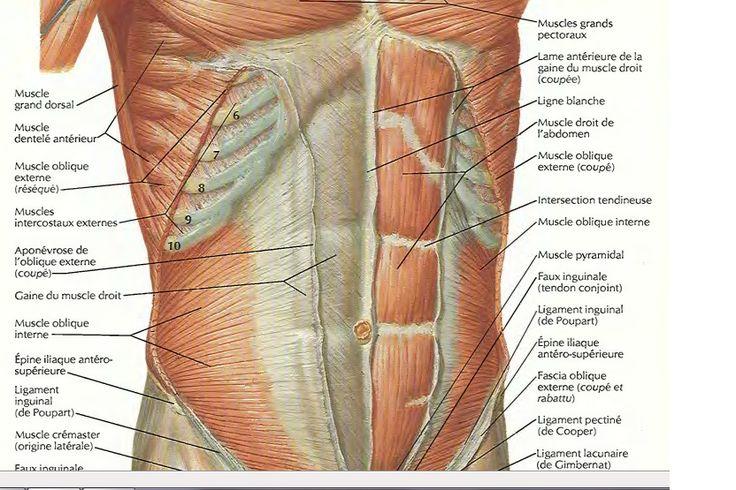 7 best images about muscles de l 39 abdomen by sereni on pinterest. Black Bedroom Furniture Sets. Home Design Ideas