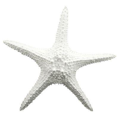 Fetco Home Decor Cruz Starfish Wall Décor & Reviews | Wayfair