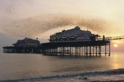 Starling flock above West Pier by  James Warwick