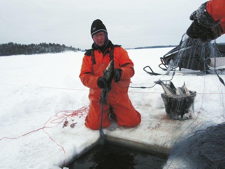 kuhan kalastus verkoilla