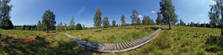 Dieses Panorama zeigt das Naturschutzgebiet Struffelt-Heide in Roetgen / Rott nähe Aachen in Deutschland. Der Naturpark gehört zum sogennannten Vennvorland im Naturpark Hohes Venn Eifel. Die Wege durch die Heide bzw. das Hochmoor führen teilweise über Holzstege und laden zu jeder Jahreszeit zum Wandern ein.
