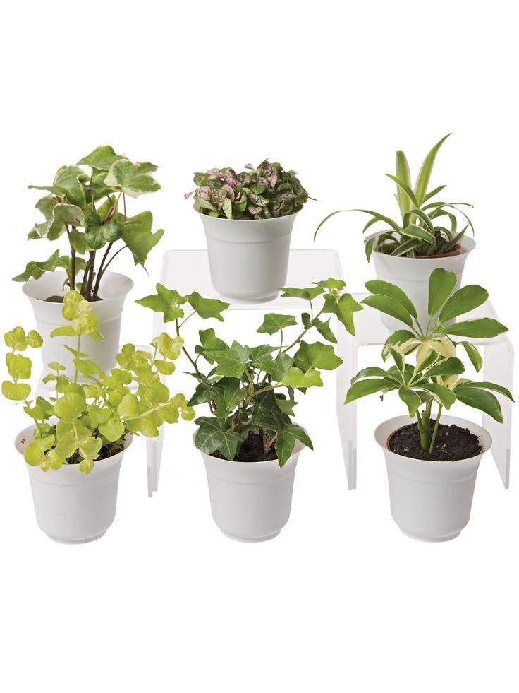 Low Light Terrarium Plant Collection