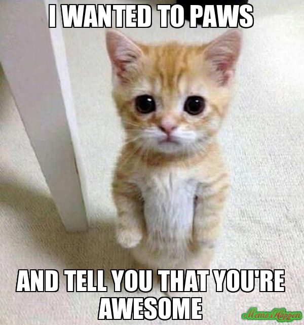 I Wanted To Paws And Tell You That You Re Awesome Kitten Timesheet Cat Quotes Funny Funny Cat Memes Cute Animals With Funny Captions