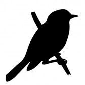vector bird silhouette on white background, vector illustration stock photography