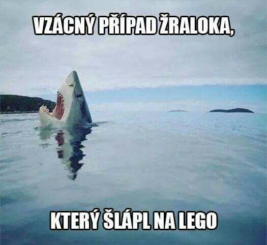 Vzácný případ žraloka
