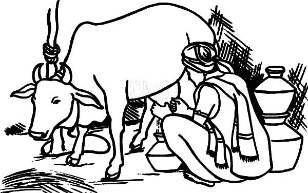 An Indian Farmer Milking Cow Coloring Pages Cow Coloring Pages