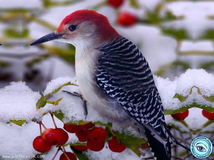 beautiful bird winter ndash - photo #17