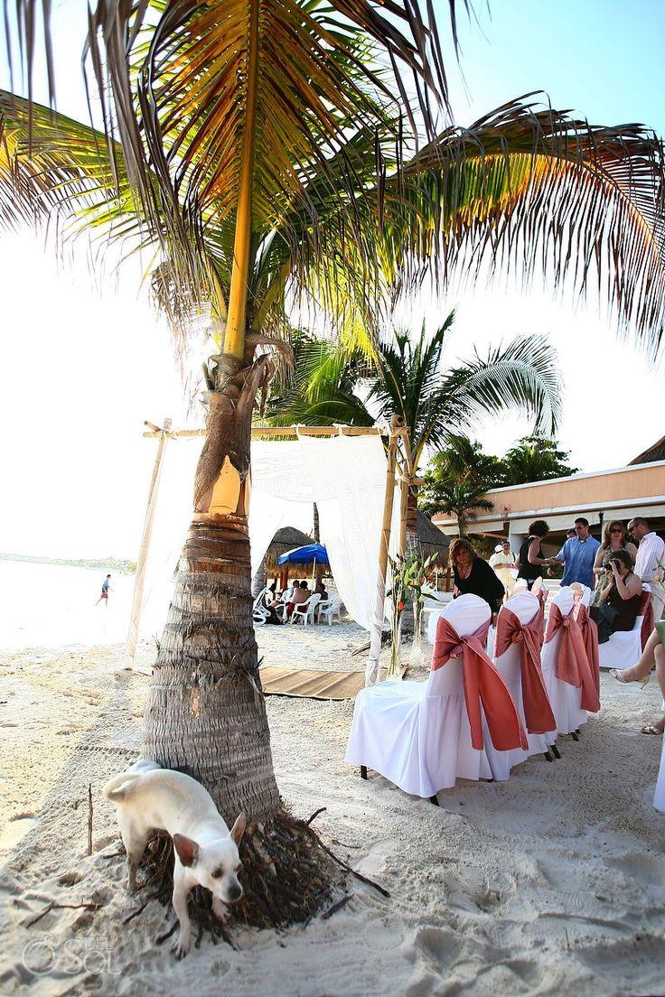 best top beach wedding photobombs images on pinterest