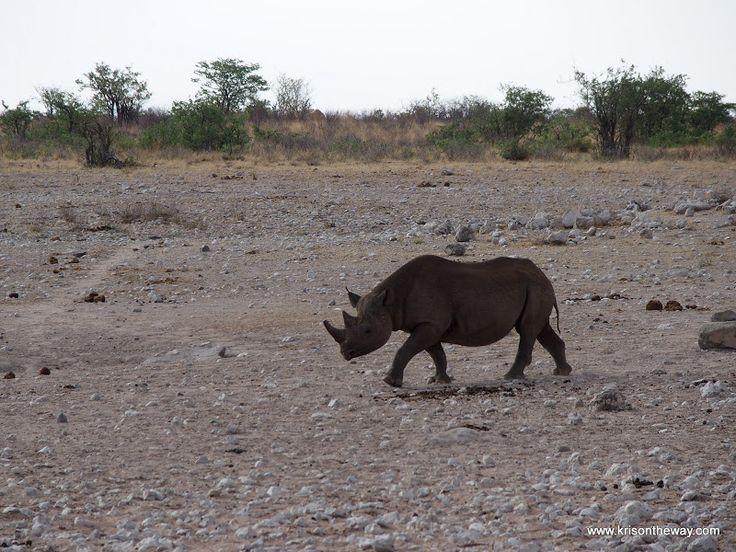 Rinoceronte negro en el Parque Nacional de Etosha, Namibia