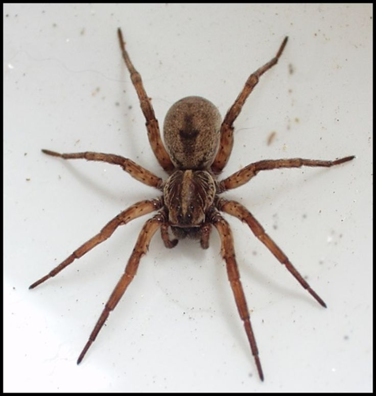 DO YOU HAVE LOTS OF SPIDERS IN AND AROUND YOUR HOUSE? http://answerangels.com.au/do-you-have-a-lot-of-spiders-in-and-around-the-house/