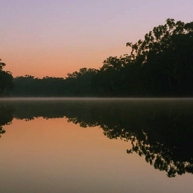 Good morning from a misty Noosa Everglades!