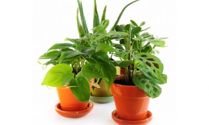 Mais de 1000 ideias sobre plantas de interior resistentes - Hogarutil plantas ...
