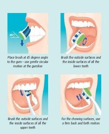 How to brush your teeth properly.