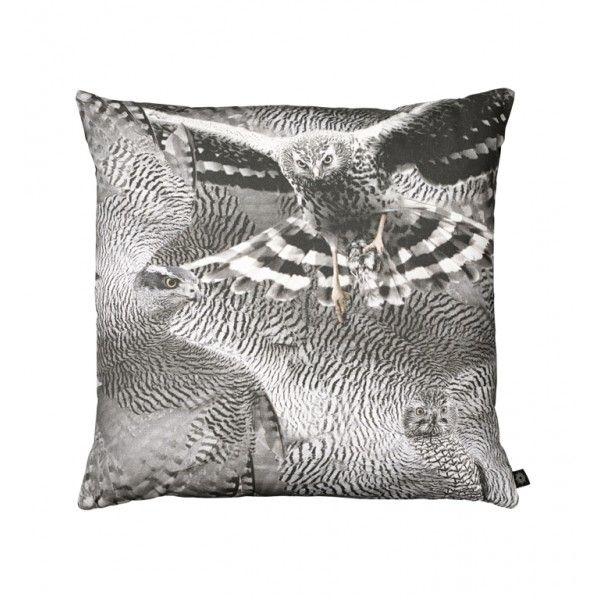 New Perigrine Falcon photo print cushion