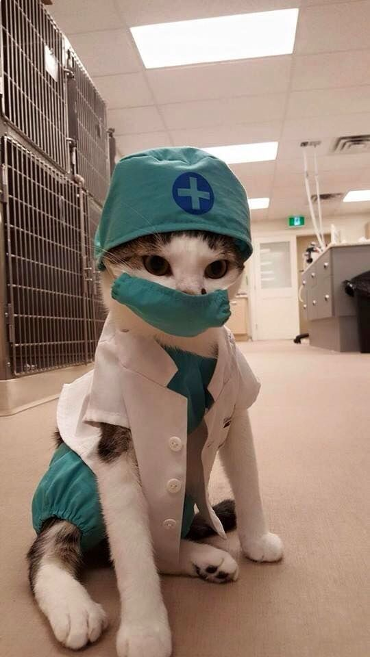 Dr. Whiskers the hospital kitten will see you now. The Secret Life of Pets