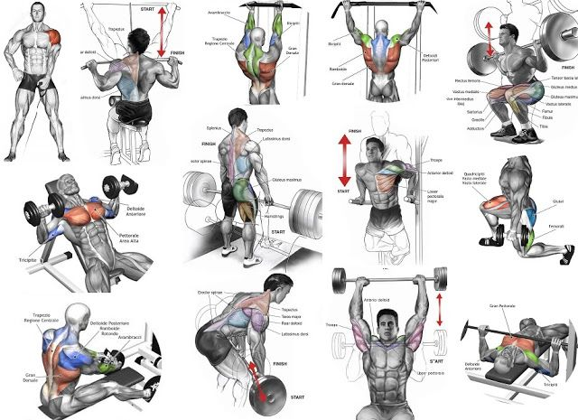 Best 25+ Arm workouts for men ideas on Pinterest