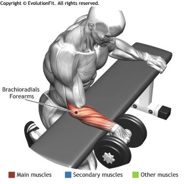 FOREARMS -  PALMS DOWN DUMBBELL WRIST CURL OVER A BENCH                                                                                                                                                      Plus