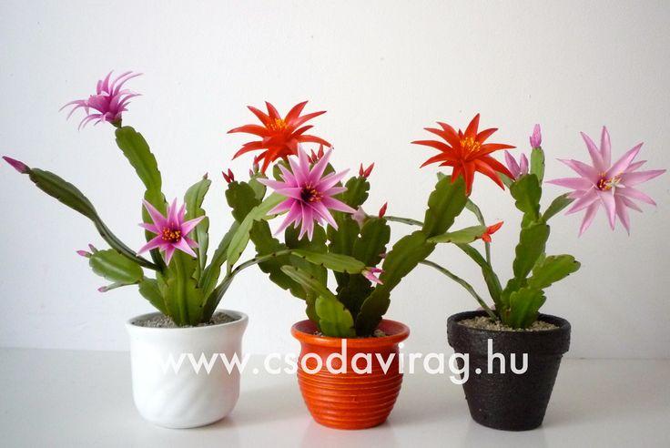 Rhipsalidopsis gaertneri (Húsvéti kaktusz) - My clay flower https://www.facebook.com/Csodavirag