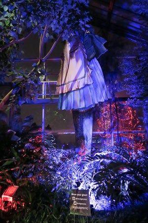 Giant Alice at Calgary Zoolights | Jill Browne
