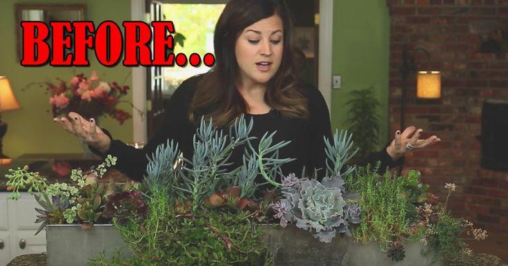 How To Deconstruct And Repot A Succulent Arrangement