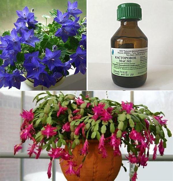 Растения будут цвести пышно и долго, если воспользоваться чудо-подкормкой!