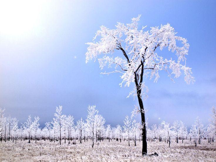 Ice trees Manitoulin Island, Ontario, Canada