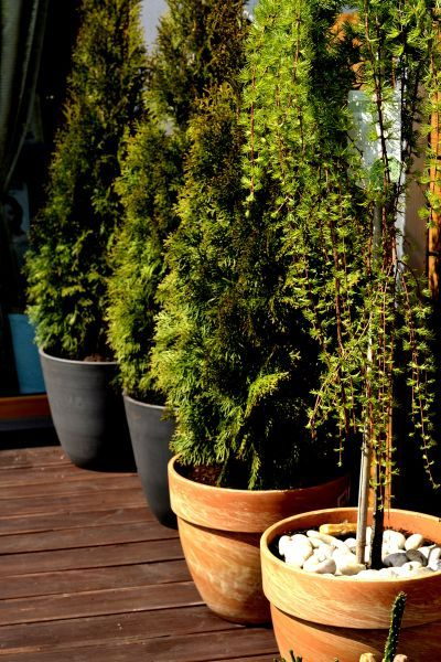 Rośliny doniczkowe w aranżacji tarasu