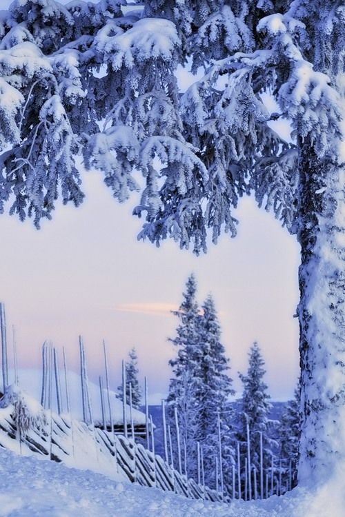 Norwegian Winter - Maybe this is why I love living in Minnesota -- it's the Norske in me.