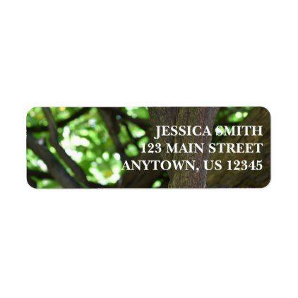 green wisteria pergola tree nature photography label return