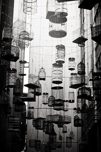 bird cages *