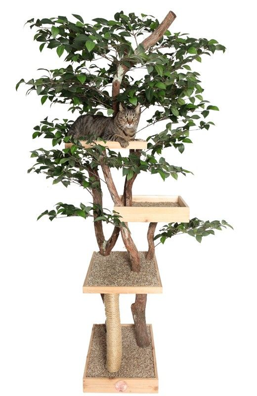 "Sycamore Cat Pet Tree House — 4 story hand crafted Tree.  Made with real dragonwood tree and silk synthetic leaves.  Includes:  16"" x 24"" base, 16"" x 24"" platform, 16"" x 16"" box, 16"" x 16"" platform and Sisal Cord Rope scratching branch.   Fully assembled with exception of the leaves. 800+125"