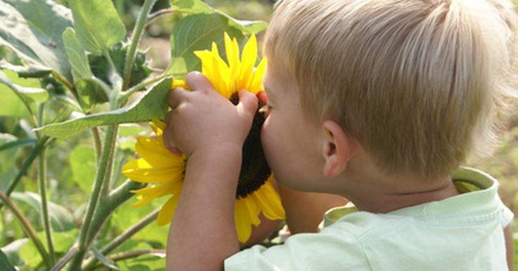 Estímulo vestibular e autismo. A maioria das pessoas está familiarizada com os cinco sentidos humanos: paladar, tato, olfato, visão e audição. Há também os sentidos menos conhecidos, que são: tátil, proprioceptivo e vestibular. A autora e educadora Carol Stock Kranowits, M.A, define o processamento sensorial como os métodos pelos quais o cérebro percebe e organiza as ...