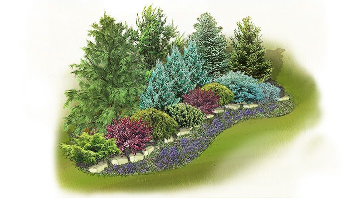 Evergreen Screen Landscape Plan Gold Coast Juniper