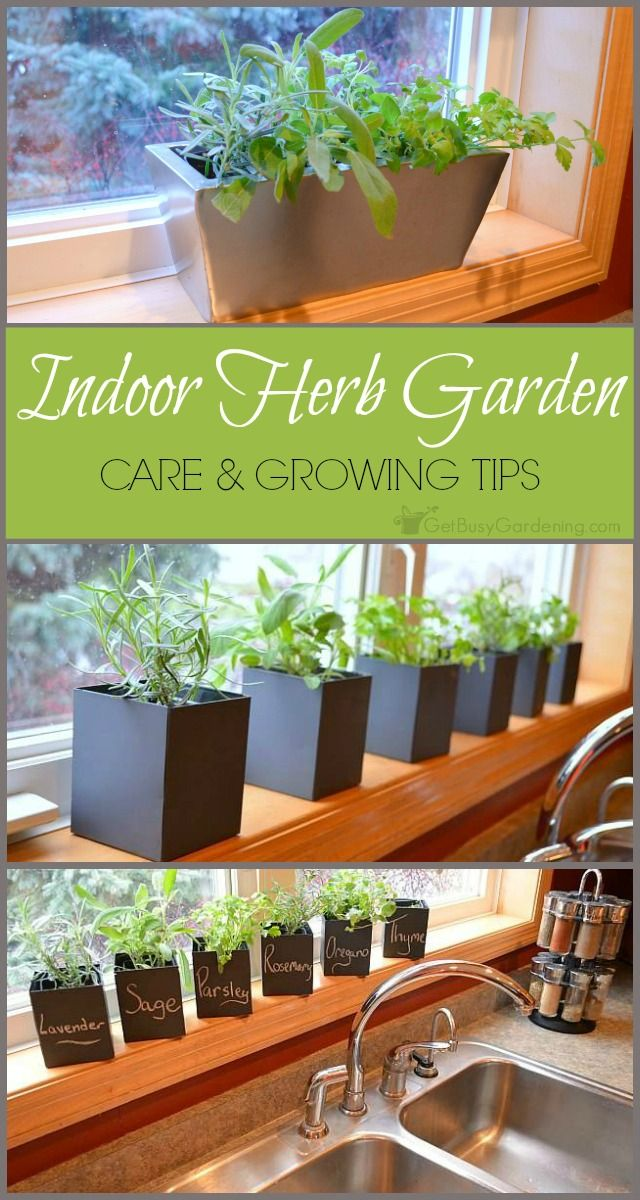 Despite the fact that growing herbs indoors is popular, they can be challenging to maintain. Here's some indoor herb garden tips to help you be successful. (AD)