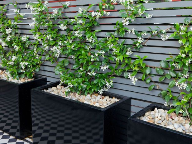 Scented jasmine trained to climb, giving a trendy look to a terrace garden. Love it!