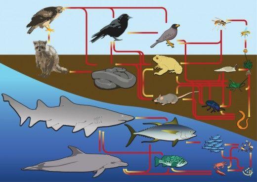 Voedselwebben zijn in het water en op het land