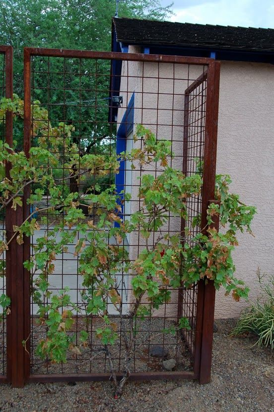 Grape screens. This would look good at the corners of the fence... add dimention