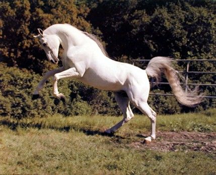 Google Image Result for http://www.deviantart.com/download/102152617/Horse_Rearing_by_Mnm25796.jpg