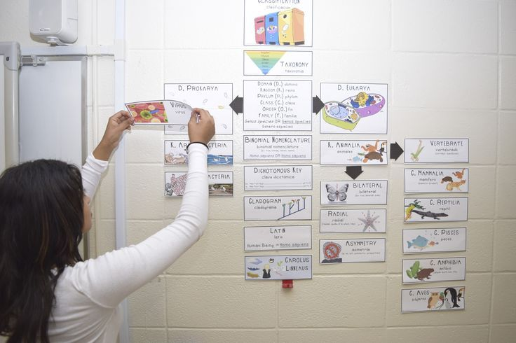 Make your science word walls more engaging with these tips!