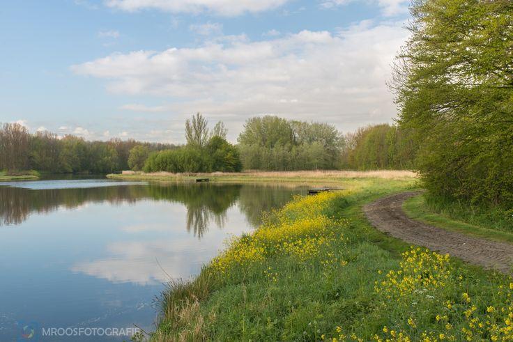 Rottemeren - Bleiswijk (gemeente Lansingerland) : Bloemenpracht, gele bloemen, koolzaad.Mei 2016 bron/fotograaf www.mroosfotografie.nl