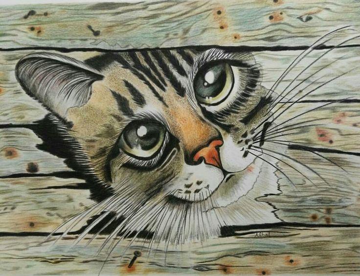 Kuruboya kedi çalışmam