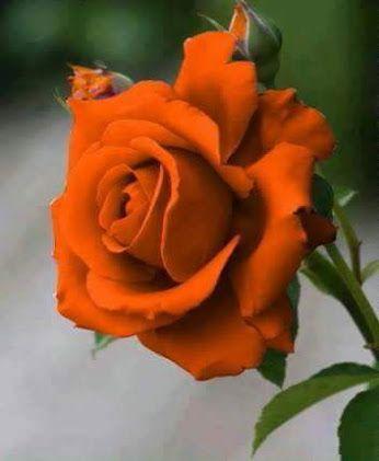 Flowers Gallery - Comunidade - Google+