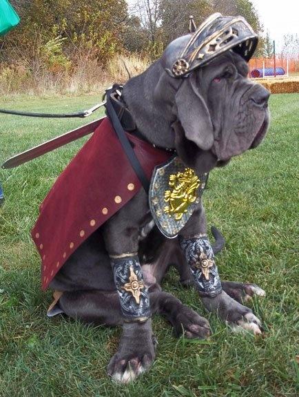 LOL gladiator Neo