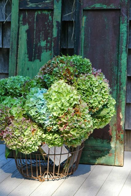 deborah jean's DANDELION HOUSE and GARDEN : Dried Hydrangeas For Fall Crafting and Decorating