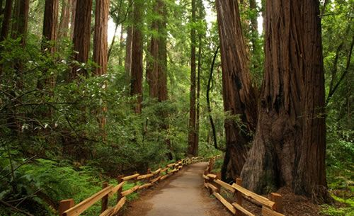 Muir Woods - Top 10 things to do in San Francisco