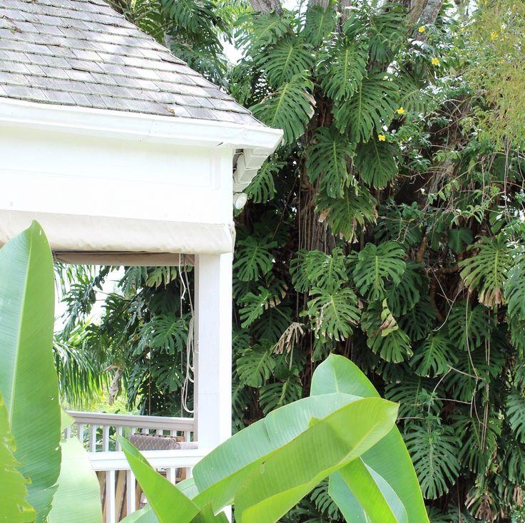 Creighton Estate Jamaica Blue Mountain Coffee Tour