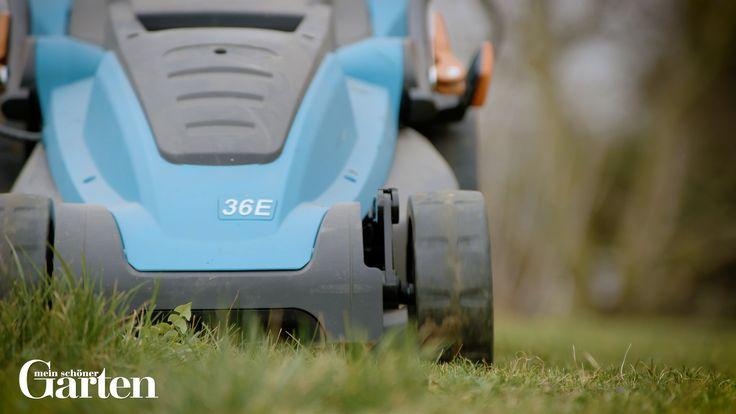 5 Tipps gegen Moos im Rasen – Ziergarten