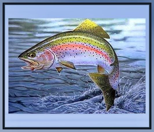 144 best images about rainbow trout on pinterest forks for Best trout fishing states