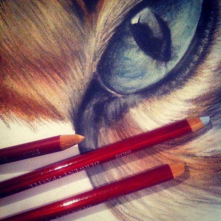 Pastel pencil derwent drawing of a Tigereye   • mariellevanleeuwen@live.nl • AR•T•INT • www.facebook.com/artintx • instagram @artint