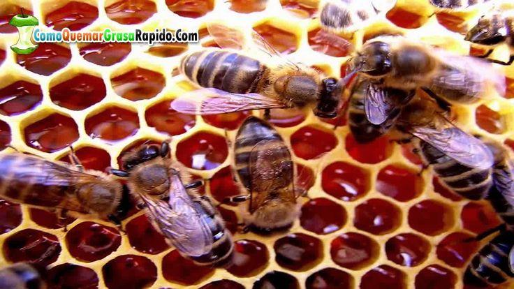 Que beneficios tiene la miel de abeja - Beneficios de la